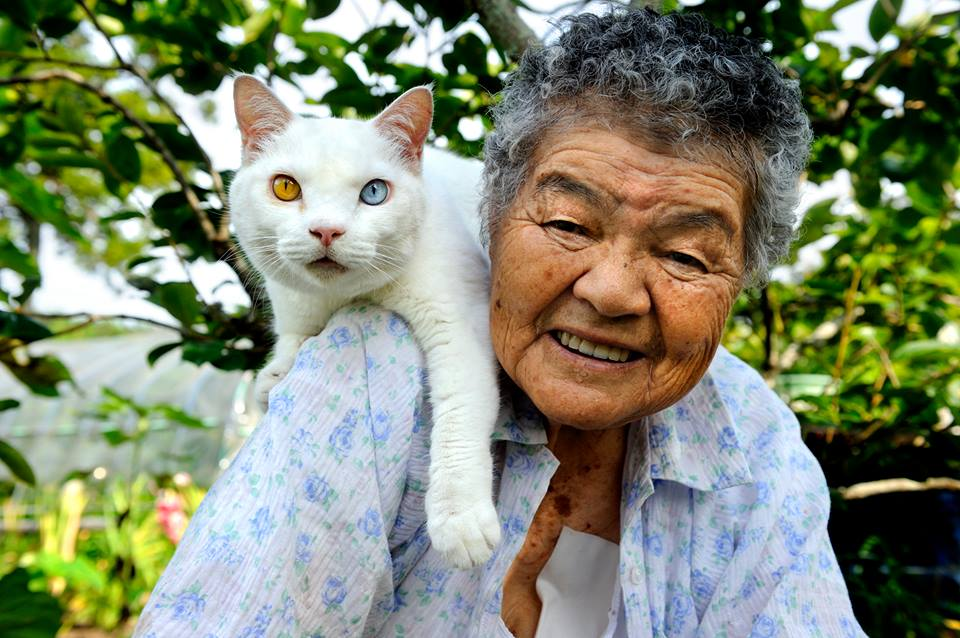The Passing of Fukumaru, the Famous Odd-eyed Cat
