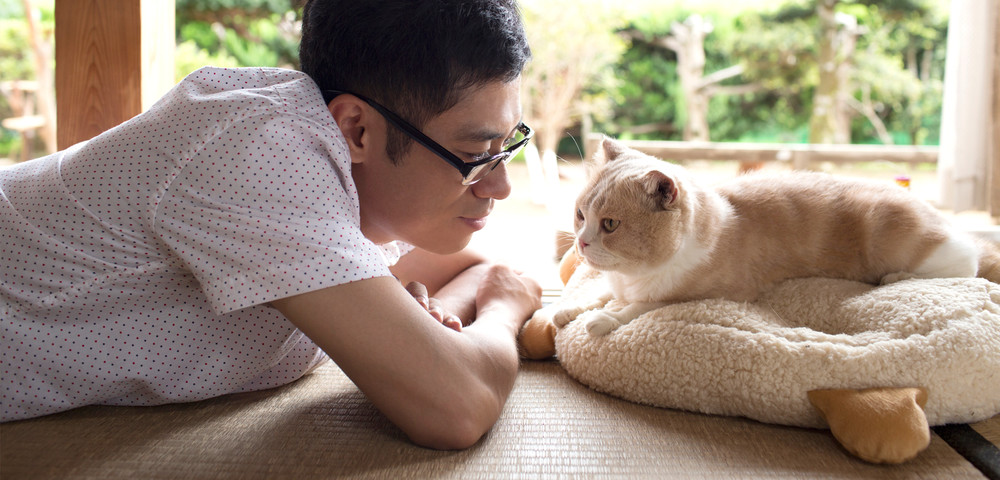 Cat-collecting App Neko Atsume is Getting a Live Action Film in 2017