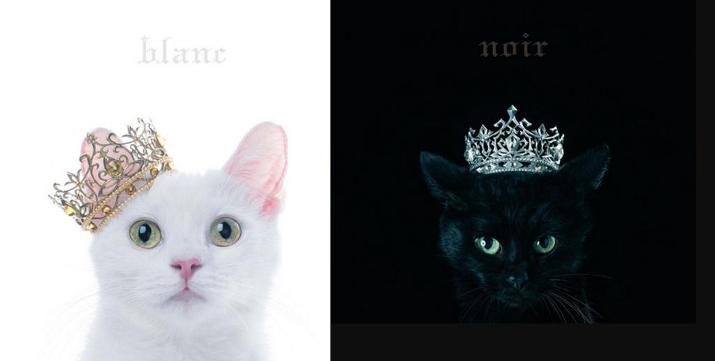 """Aimer Announces Best Selection Album, """"blanc"""" and """"noir"""""""